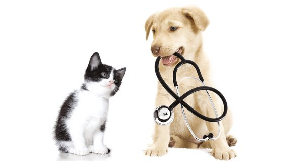 animal clinic west boca with pet pharmacy